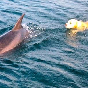 Ungleiches Paar: Hund und Delfin werden die besten Freunde
