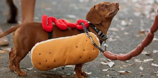 Haustiere an Karneval: Wichtige Regeln für Hunde und Katzen zur Fastnacht