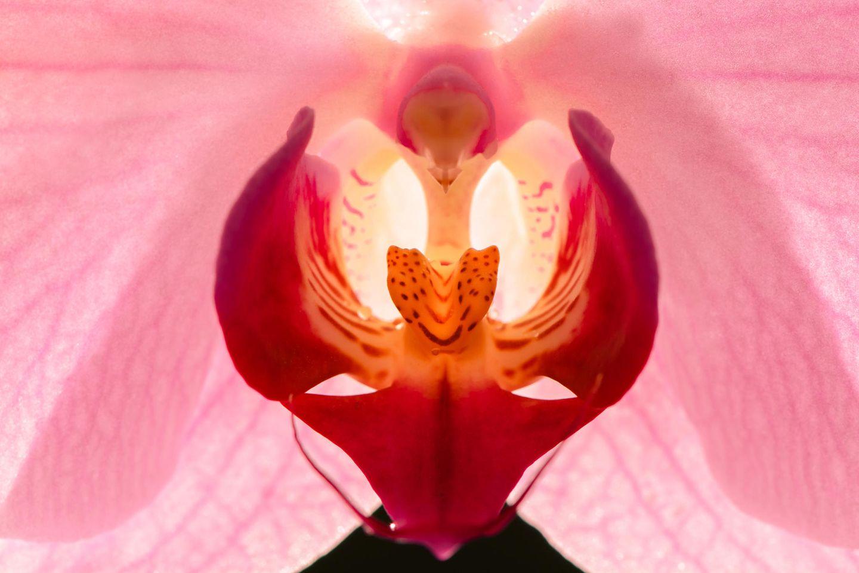 Sexstellung Blühende Orchidee