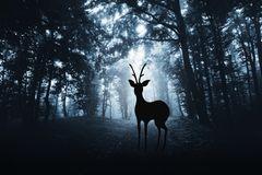 Zombie-Krankheit: Rehbock im Wald