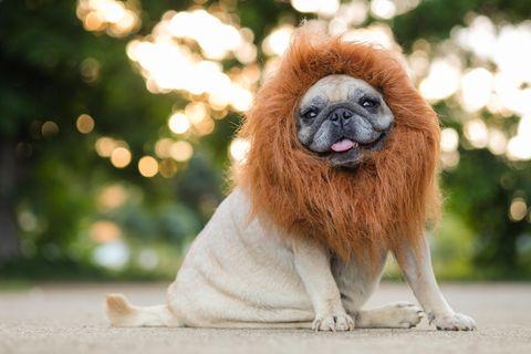 5 Sternzeichen, die perfekte Hunde-Begleiter haben