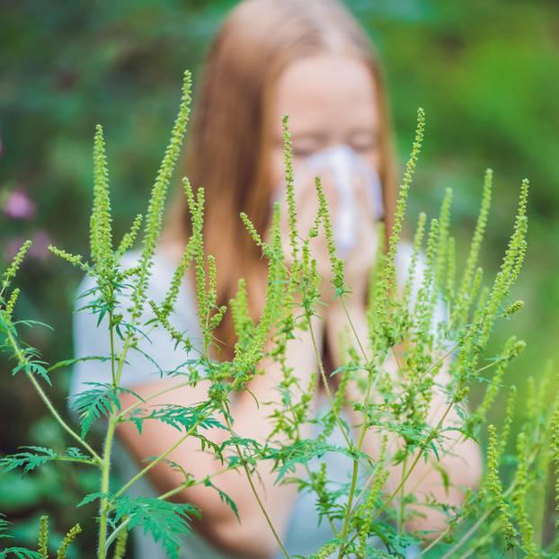 Ambrosia-Allergie: Allergikerin putzt sich die Nase