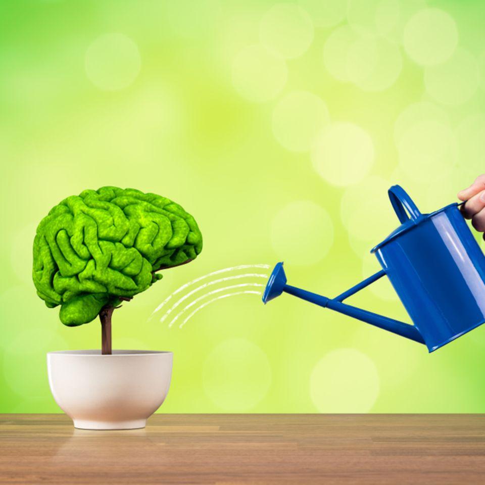 Gedächtnis verbessern – mit diesen 5 Tipps klappt's! Ein Bäumchen, da aussieht wie ein Gehirn, wird gegossen