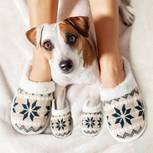 Diese Eigenschaften übernimmt dein Hund von dir!