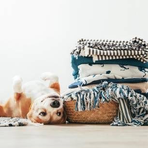 Hundeallergie: Hund neben einem Wäschekorb