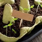 Mini Gewächshaus selber bauen - einfache Anleitung: kleine Schale mit Erde und Sprößlingen