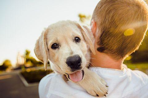 Trauer: Deswegen trauert man so sehr um verstorbene Hunde
