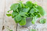 Alte Gemüsesorten: diese 7 solltest du kennen: Portulak in einer Schale
