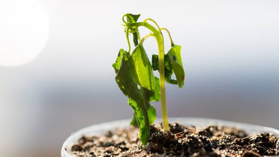 auch ohne gr nen daumen 5 tipps mit denen deine zimmerpflanzen berleben. Black Bedroom Furniture Sets. Home Design Ideas