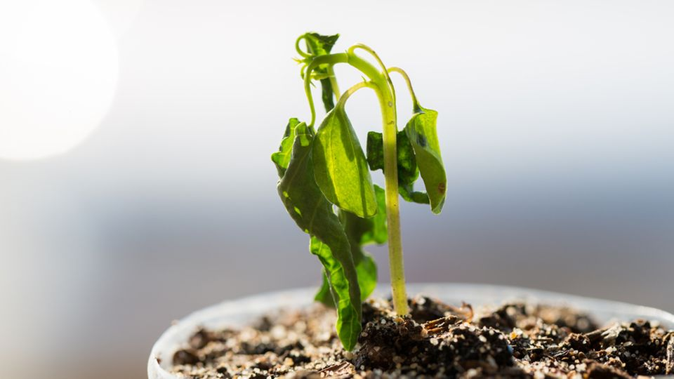 Auch ohne grünen Daumen: Mit diesen fünf Tipps hälst du dir erfolgreich Zimmerpflanzen