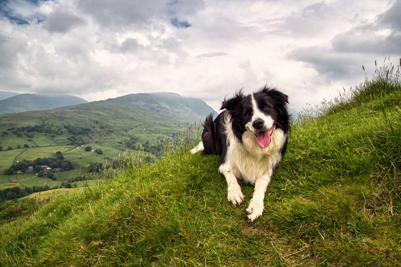 Wandern mit Hund: Packliste und Tipps für die Tour: Hund schaut in die Kamera, hinter ihm Berge und Himmel