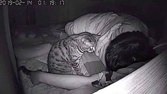 Nachtaufnahme: Er traut seinen Augen nicht als er seine Katze sieht!