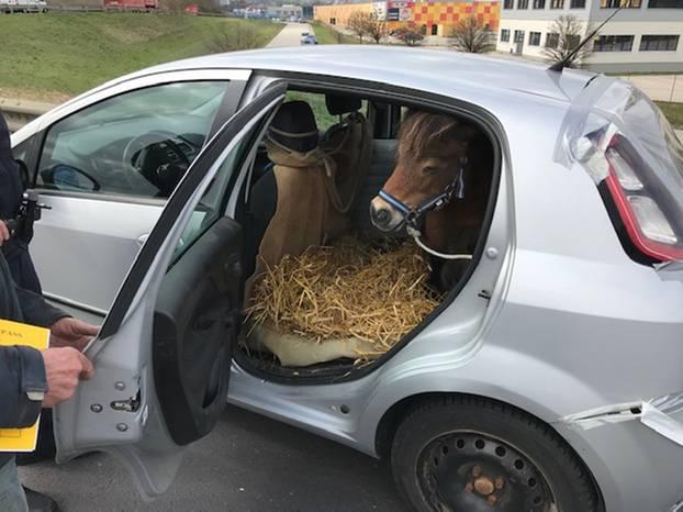 Pony Auf Der Rückbank Polizei Stoppt Kleinwagen Brigittede