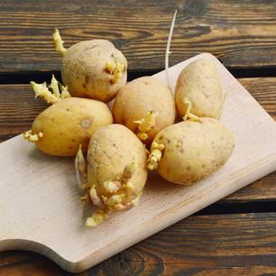 Keimende Kartoffeln: So giftig sind sie wirklich