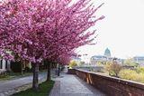 Frühlingsziele: Budapest