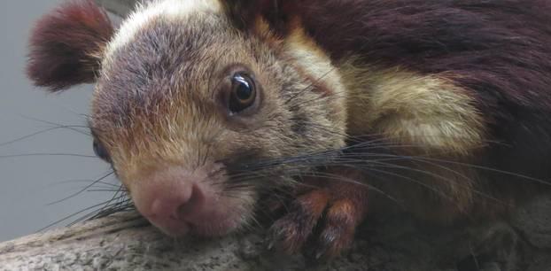 Buntes Eichhörnchen – Was es nicht alles gibt!