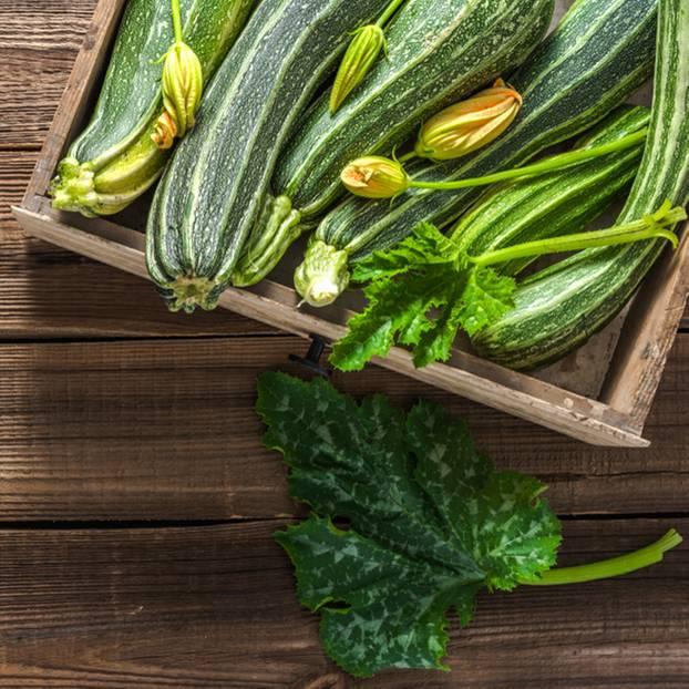 Gut gemocht Zucchini pflanzen: Anleitung und Tipps | BRIGITTE.de QU01