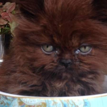 Adoptiertes Kätzchen: Mit dieser Verwandlung hätte sie nicht gerechnet