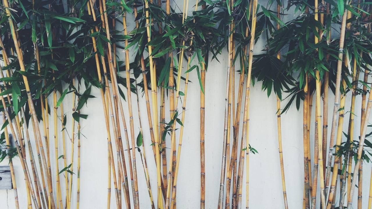 Bambus Pflanzen Und Pflegen Darauf Kommt Es An Brigitte De