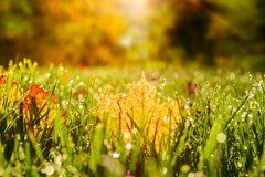 Rasenpflege im Herbst: Laubblatt auf Rasen