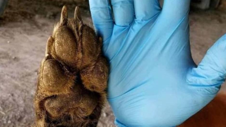 Mysteriöse Kreatur: Farmer erschiesst ein Tier, das Experten vor Rätsel stellt