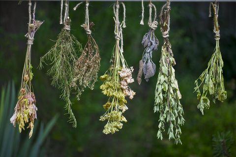 Kräuter trocknen: So leicht geht's: Kräuterbündel hängen kopfüber an einer Schnur