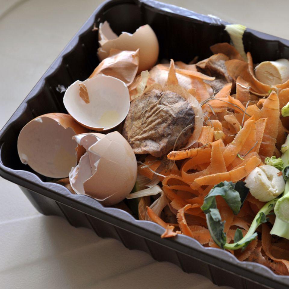Wurmkiste: So geht kompostieren in der Wohnung: Schale mit Biomüll