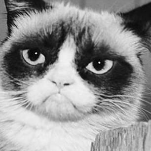 Grumpy Cat ist verstorben
