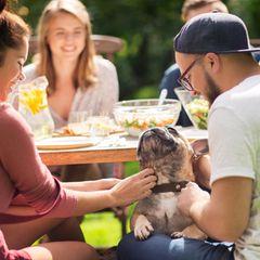 Studie: Ein Pärchen am Grill-Tisch krault eine französische Bulldogge