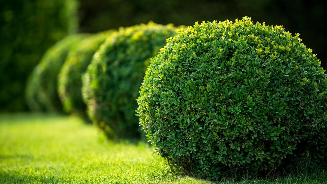 Immergrune Pflanzen So Bleibt Dein Garten Ganzjahrig Grun
