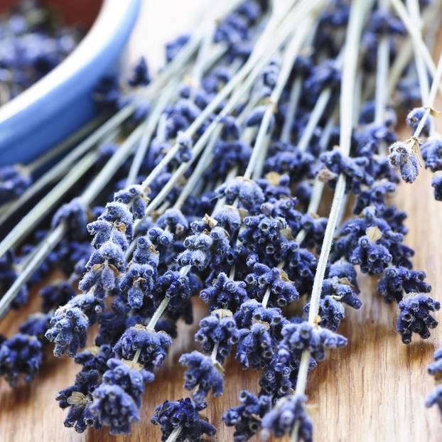 Außergewöhnlich Lavendel trocknen und weiterverarbeiten | BRIGITTE.de #NG_44