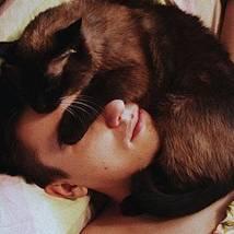 Schmusetiger: Was uns Katzen mit ihren Gesten eigentlich sagen wollen