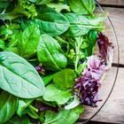 Warenkunde: Alles über Salat