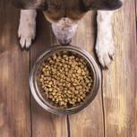 Hund frisst nicht: Hund sitzt vor Futternapf