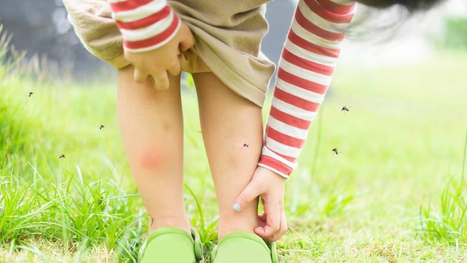 Diese simple DIY-Idee hält Mücken fern