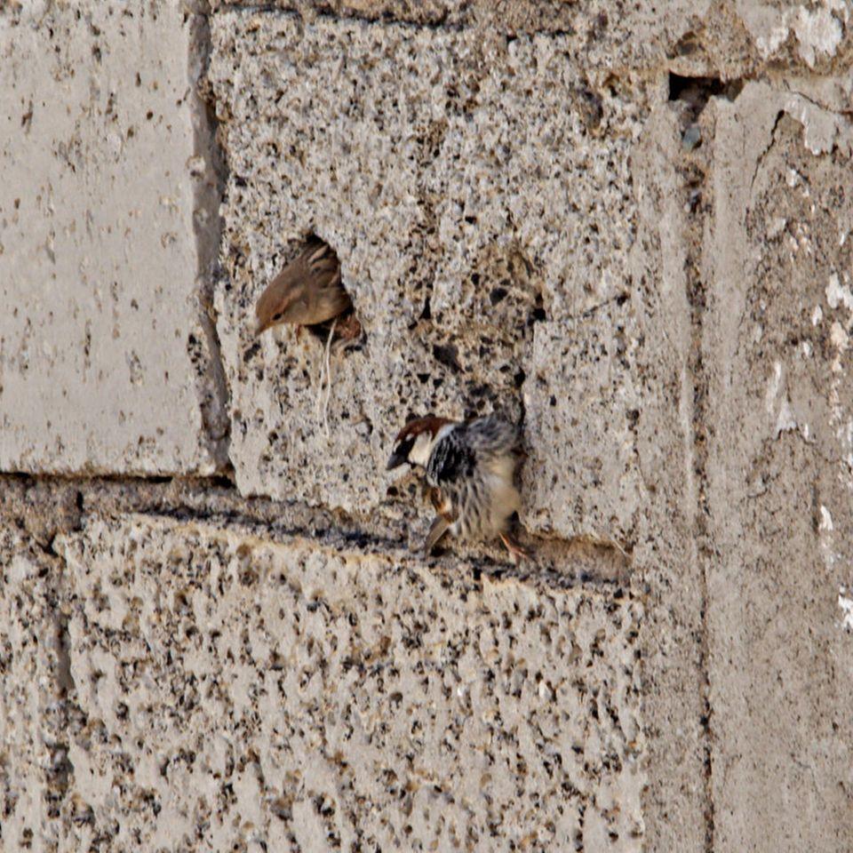 Leipzig eingemauerte Vögel