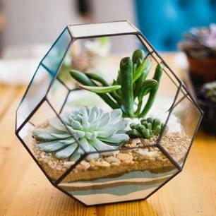 Pflanzenterrarium: Anleitung und Deko-Ideen: Sukkulenten in einem geometrischen Glasbehälter