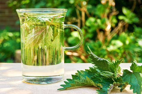Brennnesseltee Wirkung: Brennnessel und Tee auf Tisch