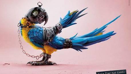 Tiere im Sadomaso-Kostüm: Was eine Schweizer Stiftung mit den Bildern bewirken will