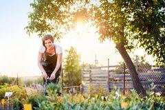 Permakultur im Garten: Frau steht im Garten und schneidet Blumen