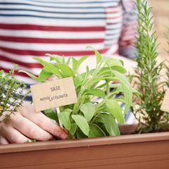 Diese Heilpflanzen solltest du unbedingt im Garten haben