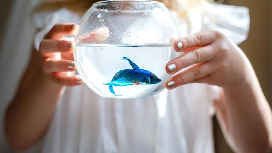 Fünf gute Gründe dafür, dass Fische das beste Sternzeichen sind!