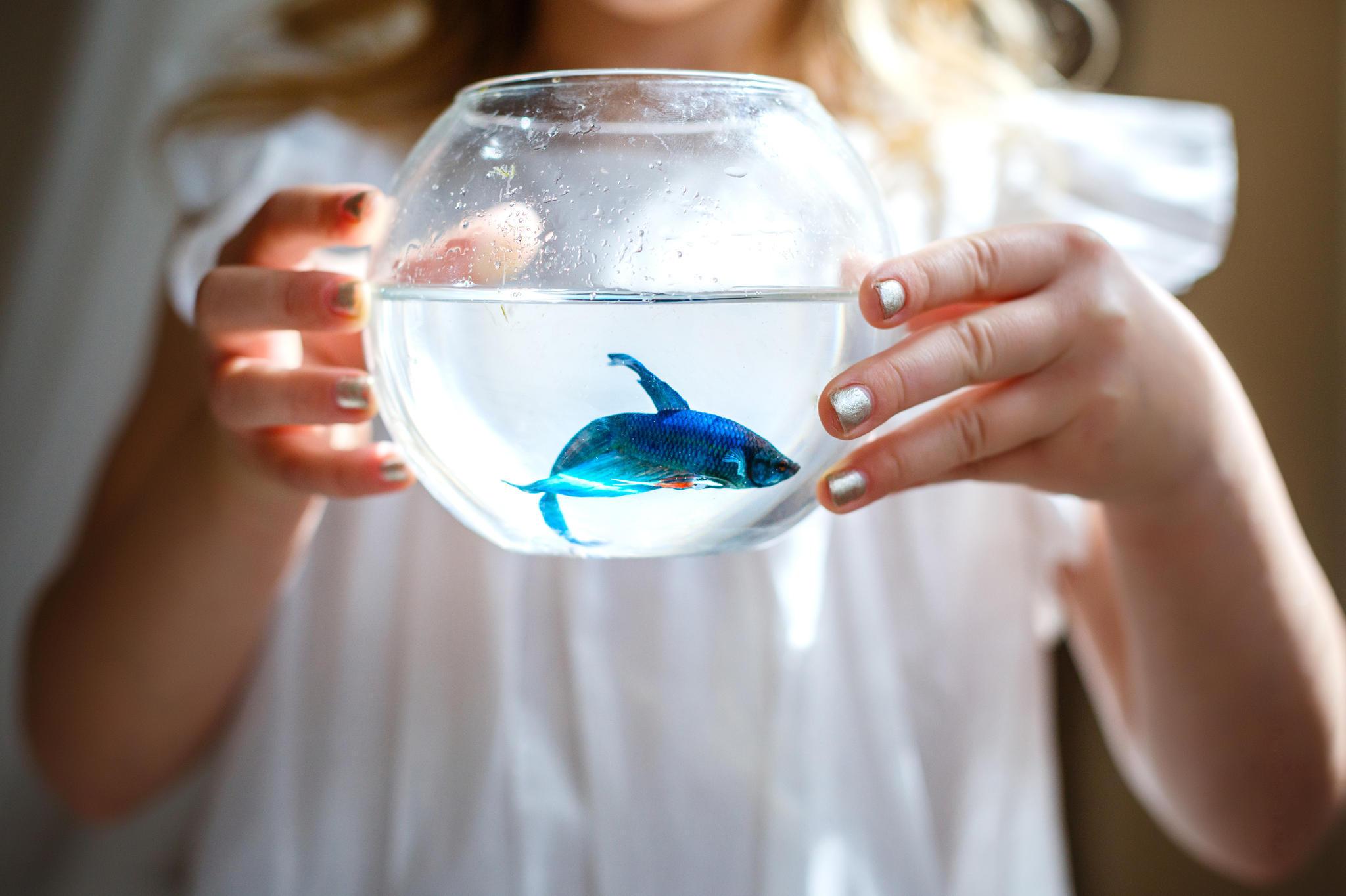 Fische frau single horoskop