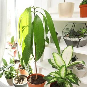 Pflanzen im Urlaub bewässern - Pflanzen im Wohnzimmer