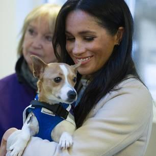 Meghan Markle mit einem Hund