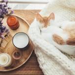 Für Katzen können Salzlampen gefährlich werden.