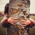 Sternzeichen: Dieser Baum passt am besten zu deiner Persönlichkeit