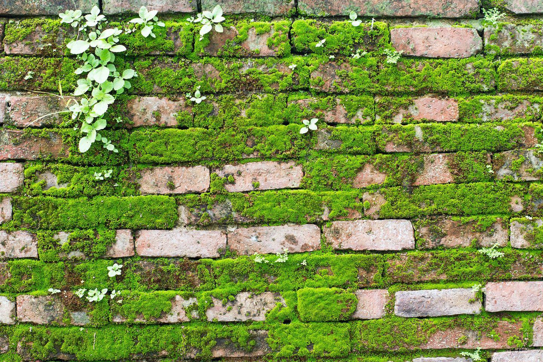 Moos entfernen: Wand mit Ziegelsteinen von Moos bedeckt