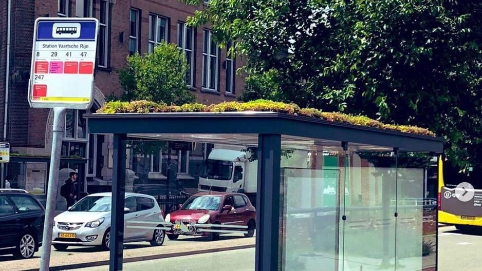 Utrecht bepflanzt Bushaltestellen gegen das Bienensterben
