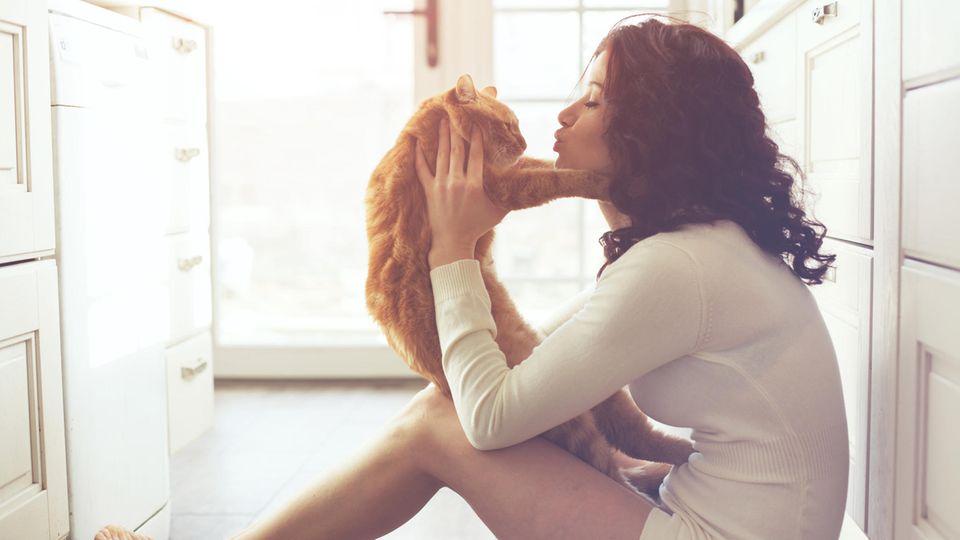 Falsche Tierliebe: Diese Dinge du niemals mit deiner Katze machen
